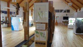 【案内】サロベツ湿原センター企画展の開催