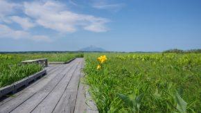 160629 サロベツ湿原 最新開花情報を更新しました