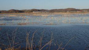 春の牧草地に生まれた沼