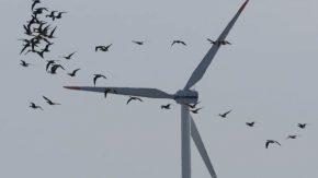 風力発電と野鳥の脆弱性マップ作り検討会 11/14 (豊富)