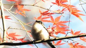 明治神宮の鳥類