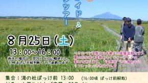【案内】8/25(土)サロベツ湿原ガイド&砂浜散歩ツアー開催