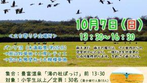 【案内】10/7(日)天然記念物の渡り鳥と黄金色の湿原を見に行こう!ツアー開催