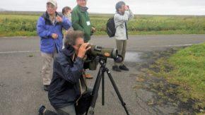 【報告】天然記念物の渡り鳥と黄金色の湿原を見に行こう!ツアーを開催しました