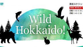 12/9(日) NHKワールド JAPAN 「Wild Hokkaido」でサロベツ原野が放送されます!