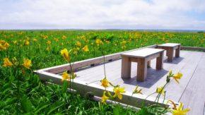 【お知らせ】 6/20(土)~ 木道自然ガイドツアーを再開します!