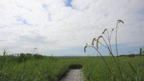 サロベツ湿原 最新開花情報 200810