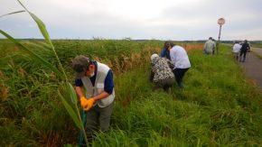 【報告】パークボランティアさん主催の外来植物除去活動が行われました。