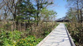 サロベツ湿原最新開花情報+木道のようす 210507