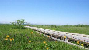 サロベツ湿原最新開花情報+木道のようす210617