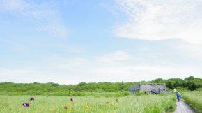 サロベツ湿原最新開花情報+木道のようす210710