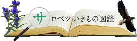 サロベツいきもの図鑑