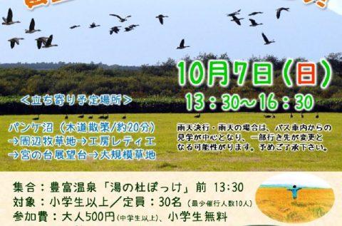 10/7(日)天然記念物の渡り鳥と黄金色の湿原を見に行こう!ツアー開催