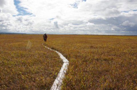 【案内】今週末20・21日開催!今シーズンラスト!黄金色のサロベツ湿原バックヤードツアー
