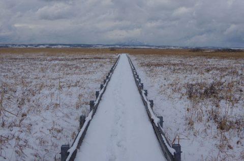雪が舞う湿原
