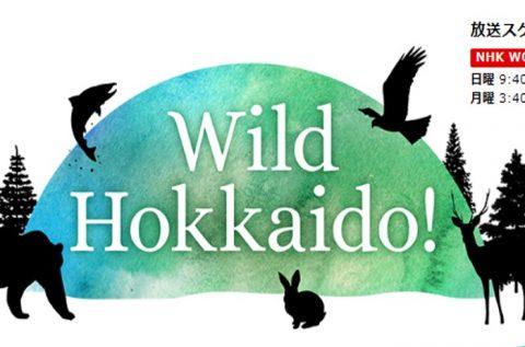 12/9(日) NHKワールド JAPAN 「Wild Hokkaido」で、サロベツ原野が放送されます!