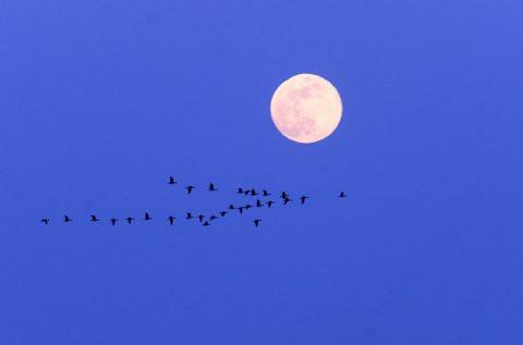 「月に雁」のサロベツ