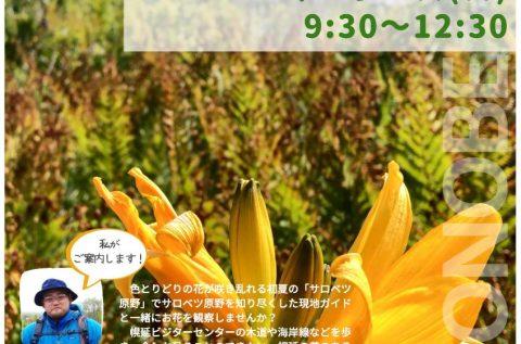 【案内】初夏のサロベツ原野 お花観察ツアー