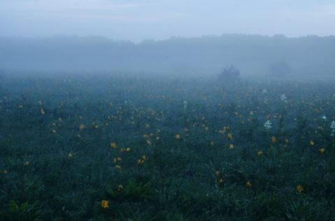 霧に包まれるサロベツ湿原