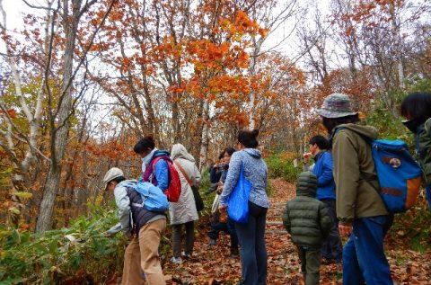 【報告】豊富町自然公園で紅葉ハイキングが開催されました!