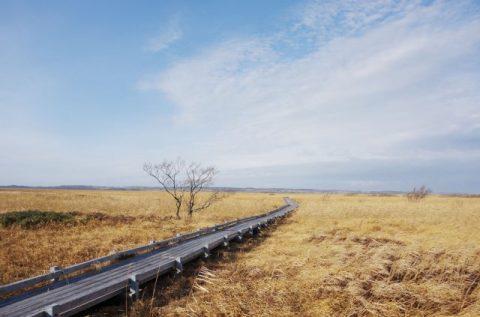 11/24(日)のサロベツ湿原、木道のようす