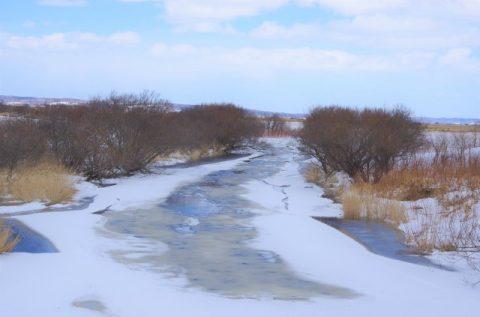 早くもサロベツ川が解氷しました!