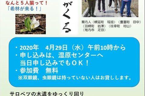 4/29(水・祝 昭和の日)オバパワー倶楽部さんによる早春木道観察会が開催されます。