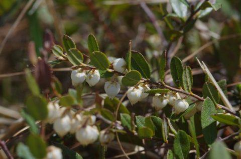 今時期、小さな花々が主役です200518