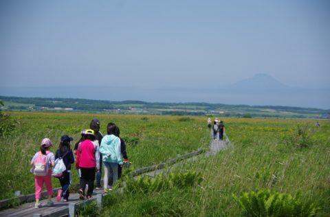 【報告】サロベツ湿原 花盛り自然観察会