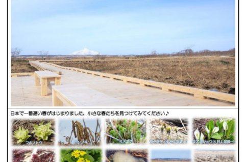 「サロベツ湿原だより4月号」と、春の扉が開いた木道のようす